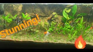 3 Tips for a BEAUTIFUL planted aquarium!