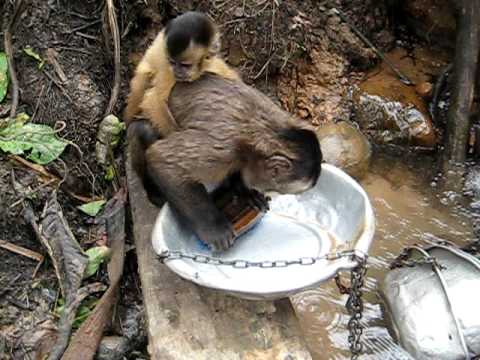 Pete the Monkey washing dishes