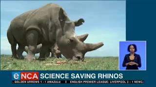 Science saving rhinos
