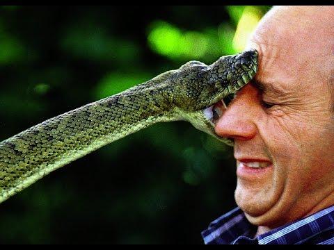 giant dead snake