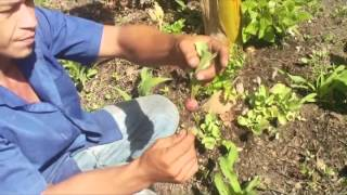 Como hacer un huerto ecológico orgánico sin deshierbar