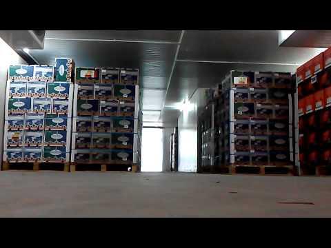 Tki Xxx In Malaysia video