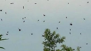 BRAZIL SKY COVERED IN SPIDERS! THIS IS SURE TO MAKE YOUR SKIN CRAWL!