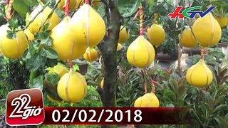 Bưởi diễn vào Sài Gòn - 30 triệu đồng/cây chưng Tết    CHUYỆN 22 GIỜ - 02/02/2018