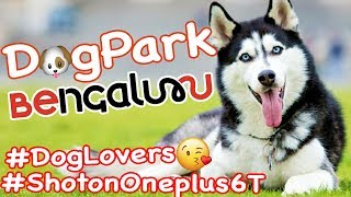 Canines Of Bangalore | Shoton Oneplus 6T | Dog Park | Cubbon Park | Dog Lovers | Cute Dogs