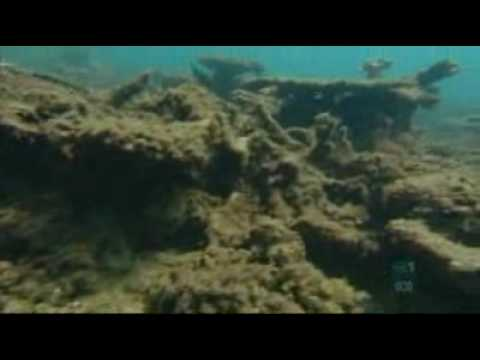 Seaweed killing Barrier Reef's biodiversity: study