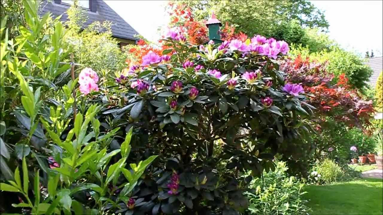 rhododendron radikal runter schneiden newwonder555 youtube. Black Bedroom Furniture Sets. Home Design Ideas