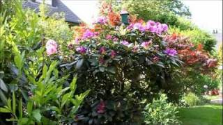 rhododendron radikal runter schneiden newwonder555. Black Bedroom Furniture Sets. Home Design Ideas