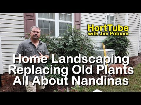 Home Landscaping - Replacing Old Plants - All About Nandinas
