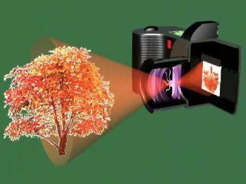 How film cameras work