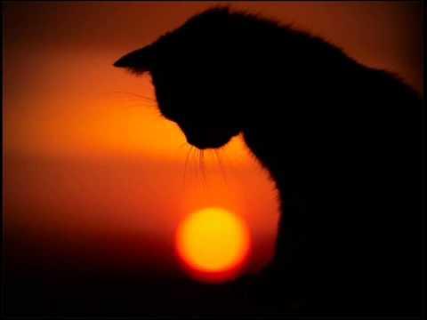 Крематорий - Кот (сублимация)