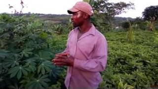 Raphael Nnakwe, Bitterleaf farmer talks about Anambra Vegetable Export programme from Abatete