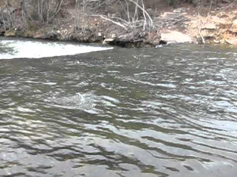 Fly Fishing in Broken Bow, Oklahoma. The Lower Mountain Fork River