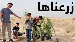 زرعنا 30 شجرة في البر