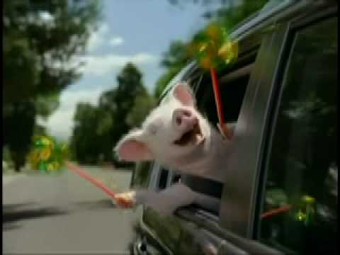 Geico Commercial New Car