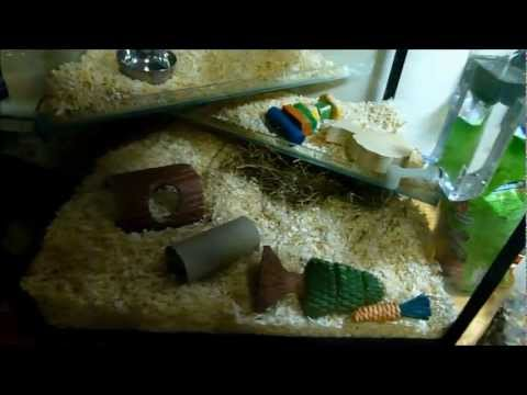 Gerbil Care - How to set up a gerbil tank :) ~ [Marvin and Sam]