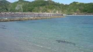 School of white tip sharks in the shallow, Beach on Haha Island, Tokyo