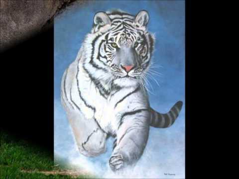 El Tigre de Bengala en peligro de extinción