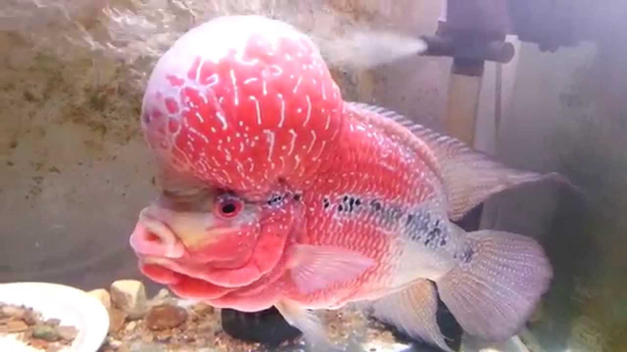 Pet Zone Tropical Fish Freshwater Tropical Fish Store