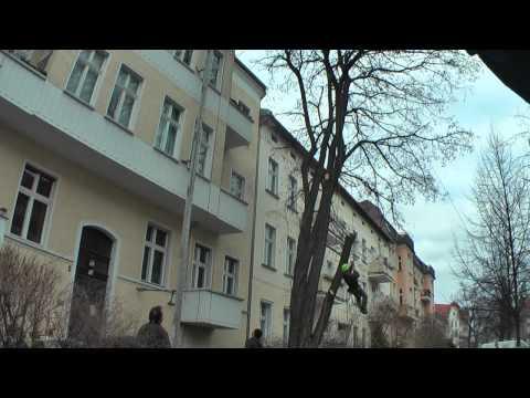 Baumkronenschnitt In Berlin Pankow