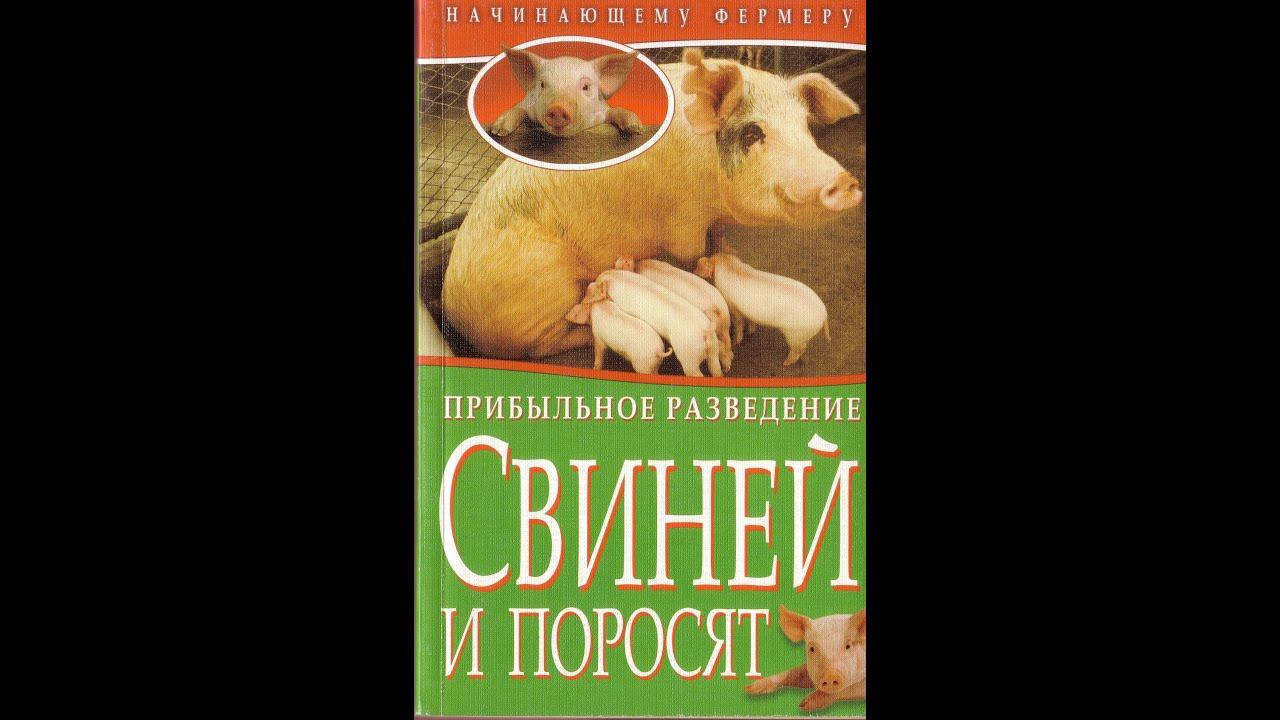 Прибыльное Разведение Свиней и Поросят. // Олег Карп - YouTube