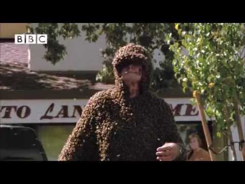 Unbelievable! - Man wears suit made entirely of bees! From 