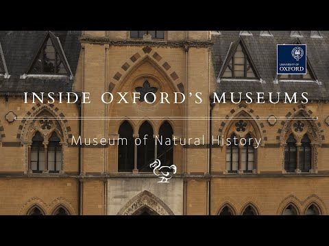 Inside the Oxford University Museum of Natural History