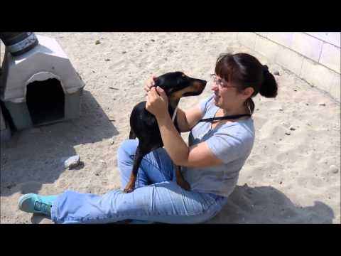 Animalinneed: Mirta and Toby in the park