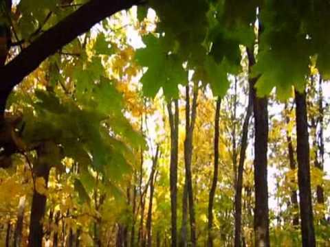 В гостях у Осени