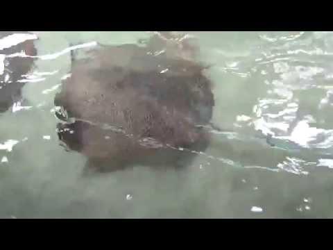 Stingrays, Tiger sharks, etc at Seaworld