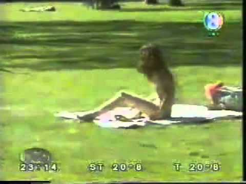 Youtube - Dog Sex With Girls Must Watch Brought To You By Mubeen Meo.flv video