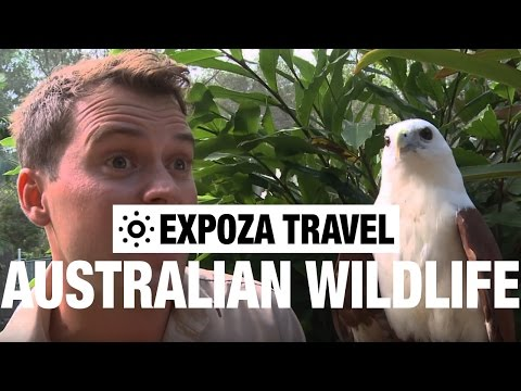Australian Wildlife (Australia) Vacation Travel Wild Video Guide