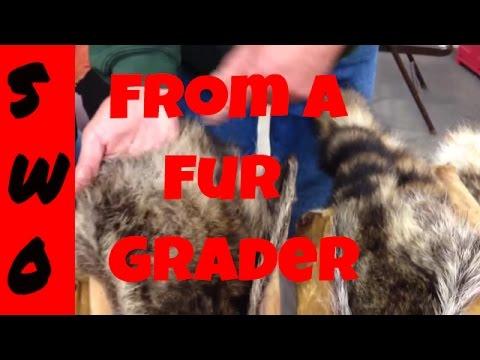 Raccoon Fur Grading