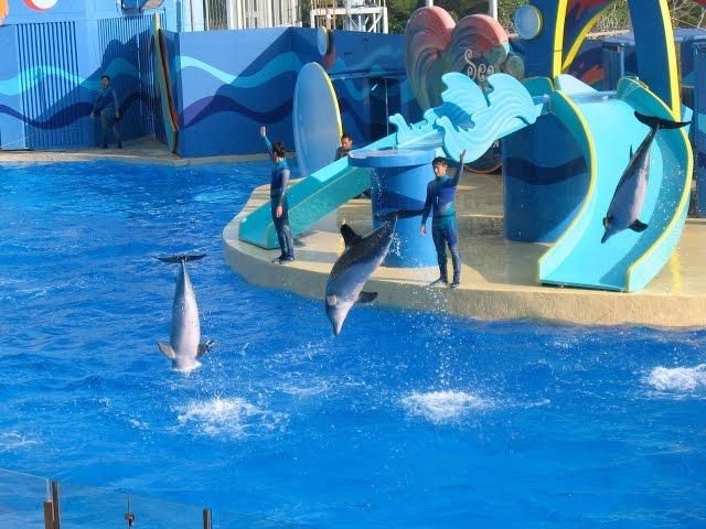 Ocean Park Hong Kong Attractions | Penguin Aquarium Adventure Video in Honk Kong