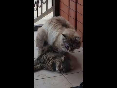 posmotret-porno-video-gde-devushka-svyazana