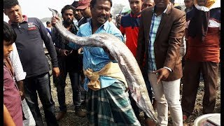Really Amazing Sea Fish Market In Bangladesh II Sea Fish Market bd II fishing Village