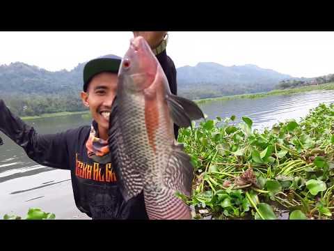 Cara Unik Mancing Ikan Nila Lihat Hasilnya !!