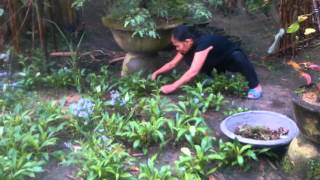 Vườn rau của ba, vườn hoa của mẹ