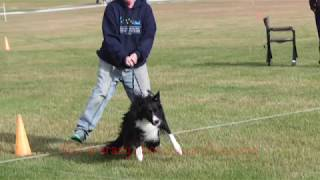 Dog Training Using Recallers Games builds a Glorious Relationship