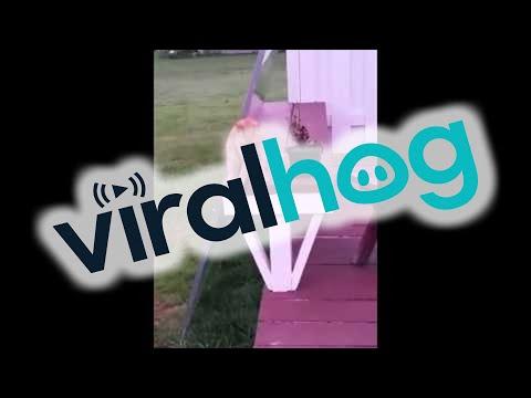 人間の様に座る猫が激写される!