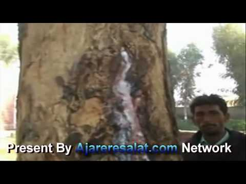 '10 Muharram  Mojza Milk Coming Form Tree'