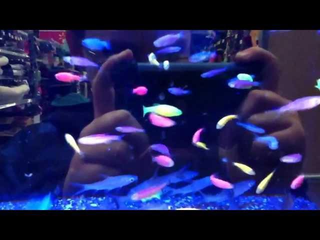 Neon Fish at Walmart Neon Fish at Walmart