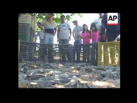 Govt program reintroduces Orinoco Crocodiles and Array Turtles into wild