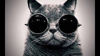 Приколы животные 2019 ржачные коты 2019 Смешние собаки 2019