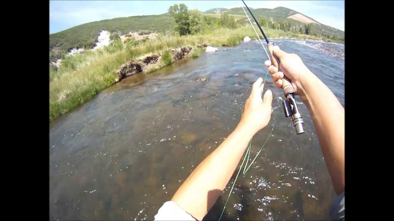 Fly fishing green drake hatch provo river utah youtube for Green river utah fishing report