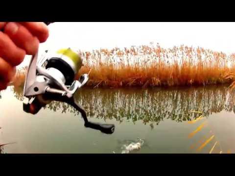 подводное видео поклевка судака