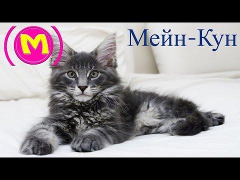 meyn-kun-leo
