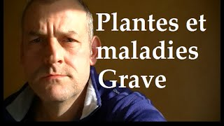 Plantes sauvages comestibles Attention aux Maladies graves