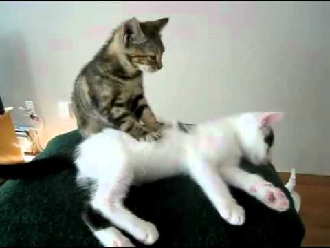 Thumb Cat masseuse