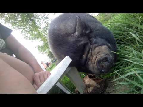 Animalistic Harassment